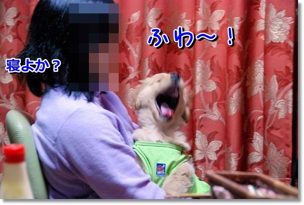 DSC_0034_20120226162934.jpg