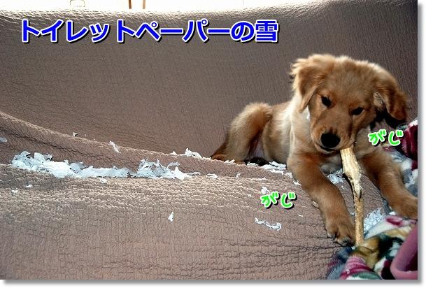 DSC_0034_20120411015255.jpg