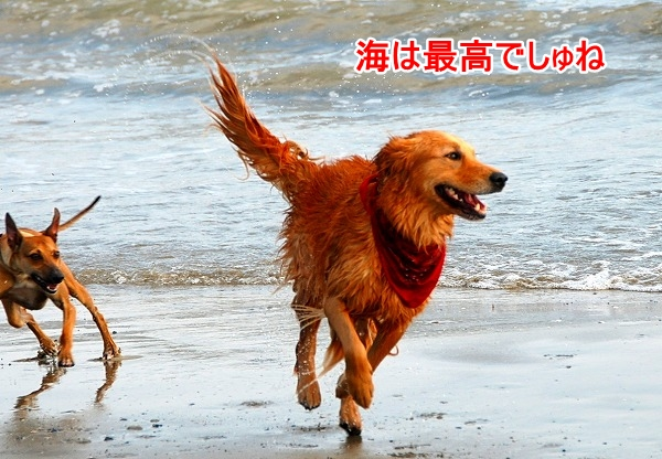 DSC_0035_20110509005342.jpg