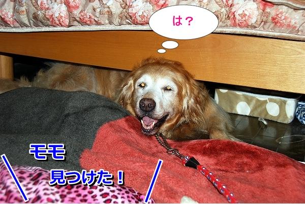 DSC_0035_20110819235340.jpg