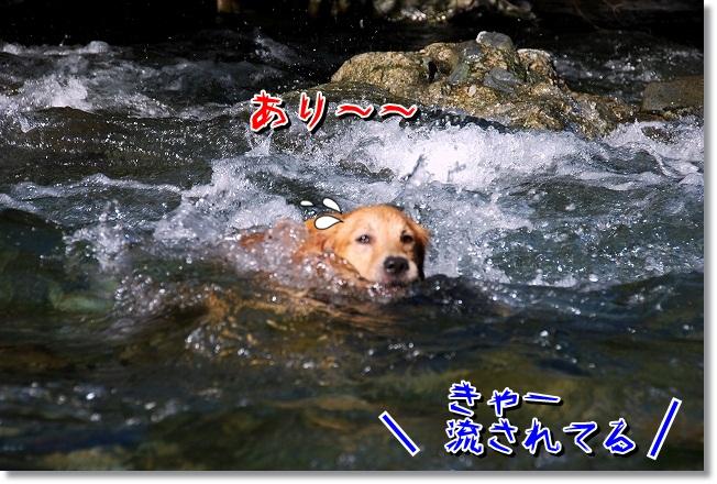 DSC_0035_20110925002817.jpg