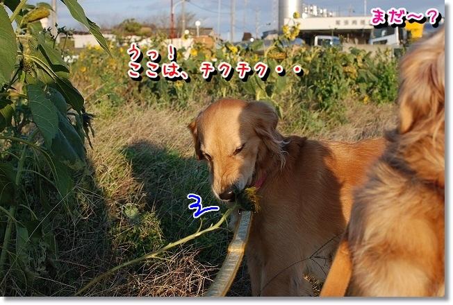 DSC_0035_20111212164310.jpg