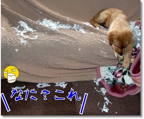 DSC_0035_20120411015255.jpg