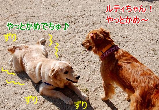DSC_0036_20110131210259.jpg