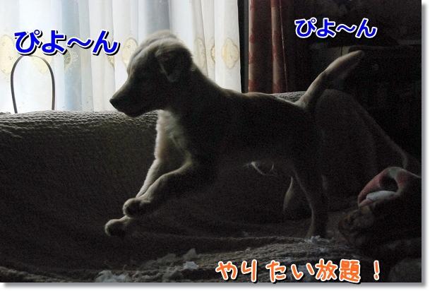 DSC_0037_20120411015254.jpg
