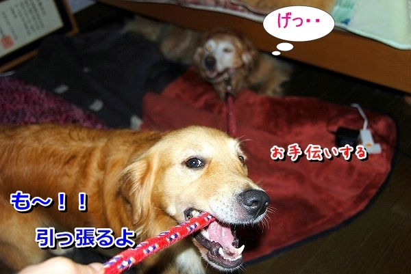 DSC_0038_20110819235340.jpg