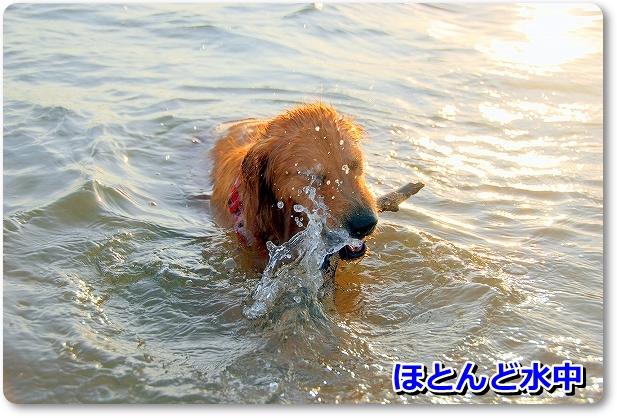 DSC_0038_20110820213714.jpg