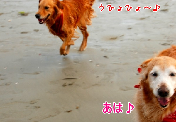DSC_0039_20110509005338.jpg
