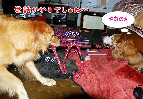 DSC_0039_20110819235339.jpg