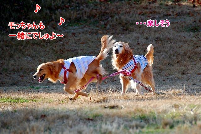 DSC_0041_20110204222656.jpg
