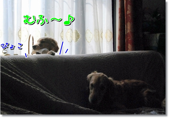 DSC_0041_20120411015253.jpg