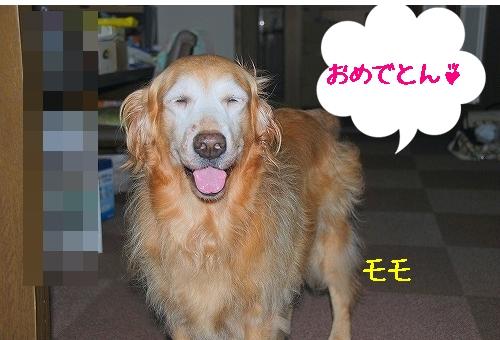 DSC_0042_20100901021141.jpg