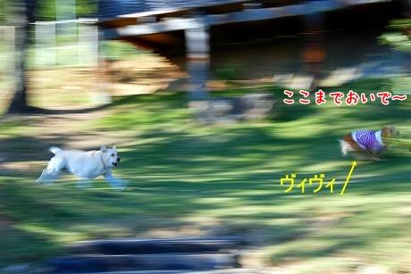 DSC_0042_20101104012530.jpg
