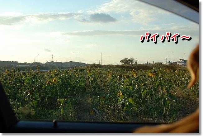 DSC_0042_20111212164309.jpg
