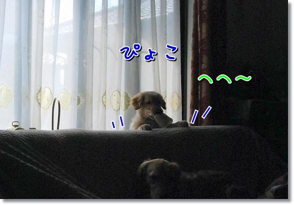 DSC_0042_20120411015253.jpg