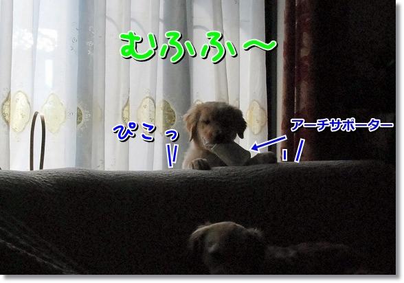 DSC_0043_20120411015334.jpg