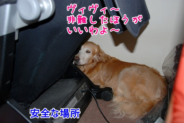 DSC_0044_20110701165031.jpg