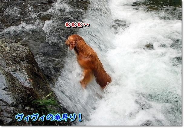 DSC_0044_20110914172740.jpg