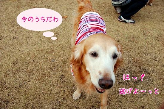 DSC_0048_20101218180942.jpg
