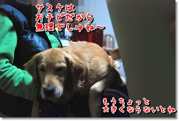 DSC_0048_20120226163031.jpg