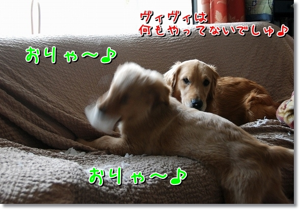DSC_0048_20120411015333.jpg