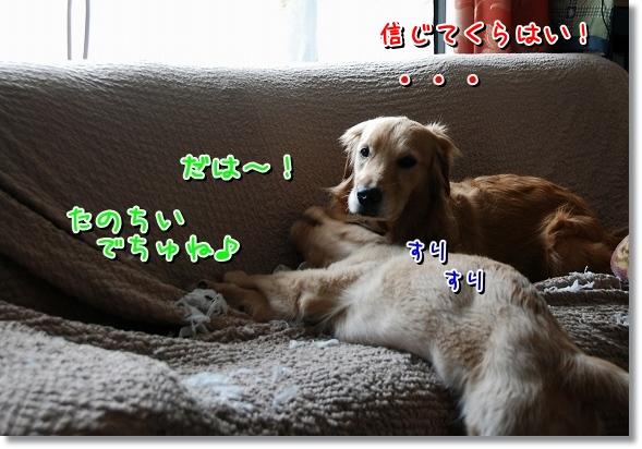 DSC_0049_20120411015333.jpg