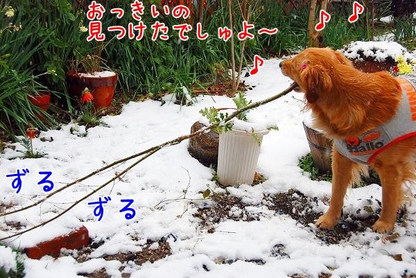 DSC_0050_20110211235146.jpg