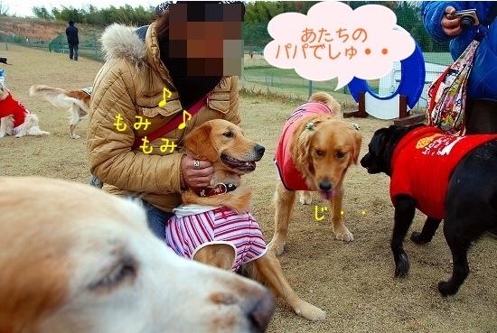 DSC_0051_20101218180942.jpg