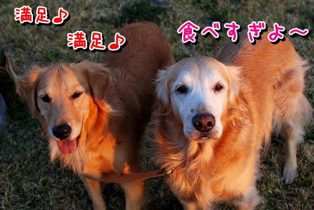 DSC_0051_20111212170702.jpg