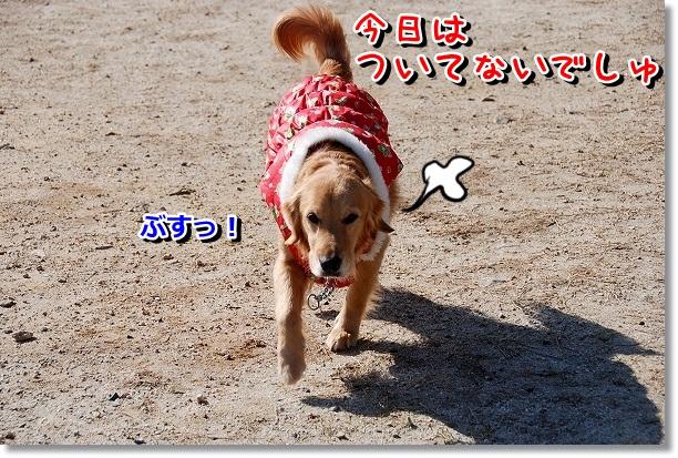 DSC_0053_20120227220932.jpg