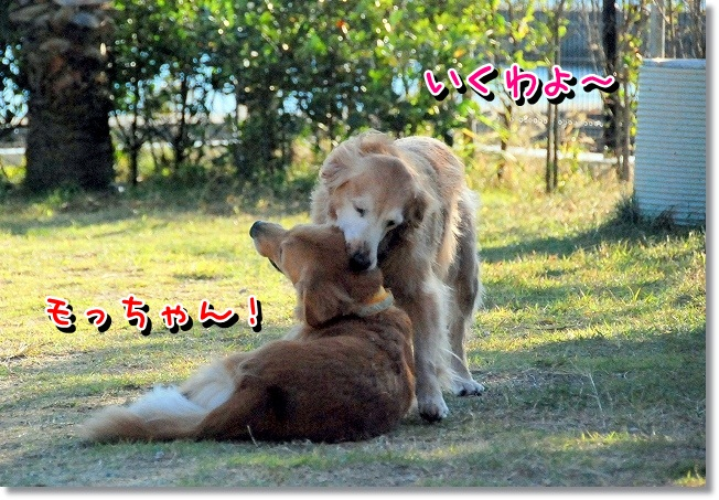DSC_0055_20111130095227.jpg