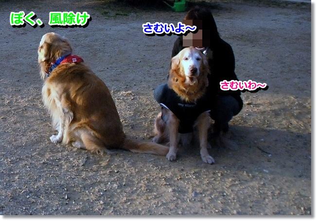 DSC_0055_20111220181927.jpg
