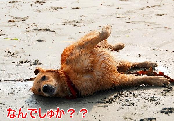 DSC_0056_20110509005434.jpg