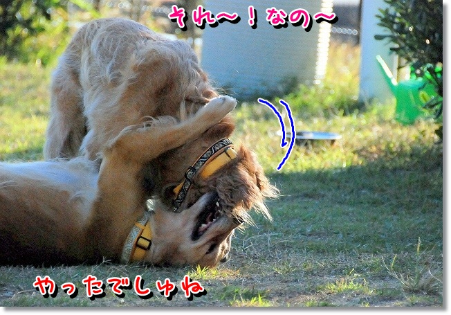 DSC_0056_20111130095227.jpg