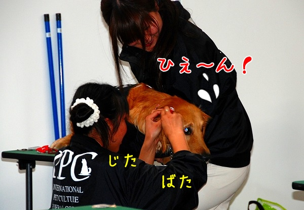 DSC_0057_20110207210156.jpg
