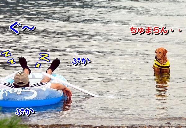 DSC_0059_20110823205257.jpg