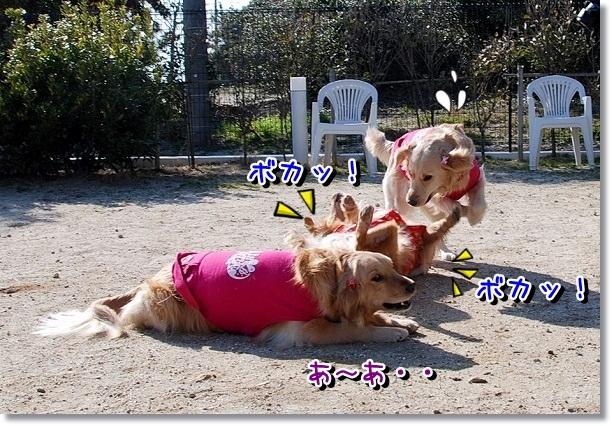 DSC_0059_20120227221022.jpg