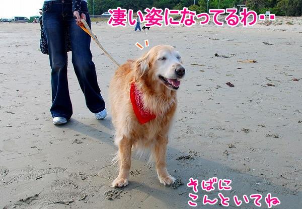 DSC_0060_20110509005434.jpg