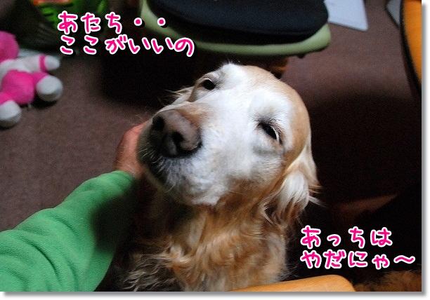 DSC_0061_20120302115613.jpg