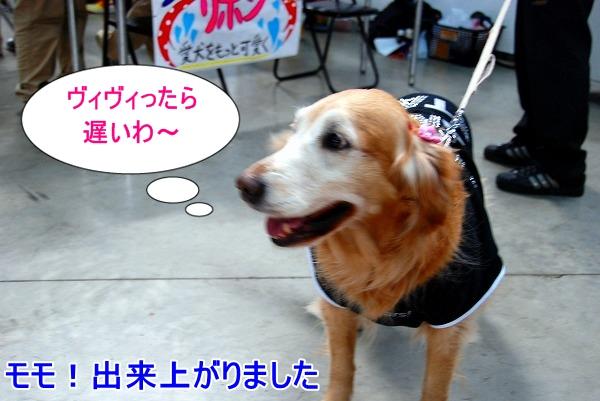 DSC_0062_20110207210154.jpg