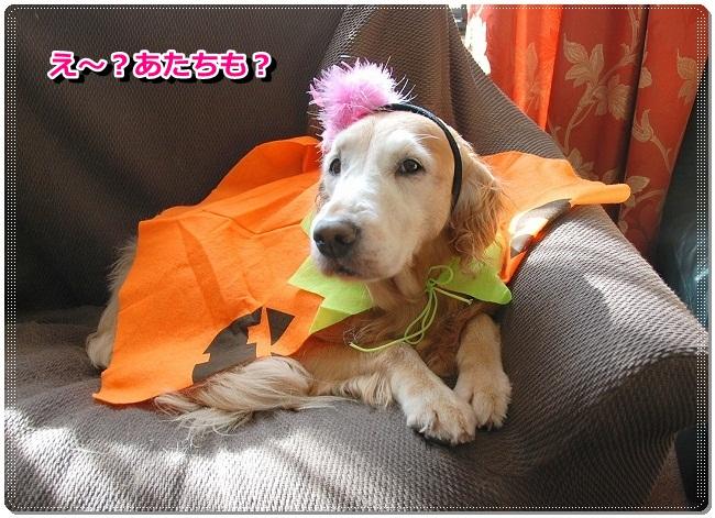 DSC_0062_20111031104710.jpg