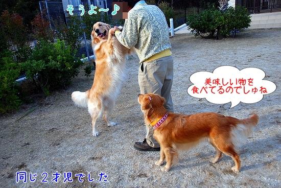DSC_0063_20101205223220.jpg