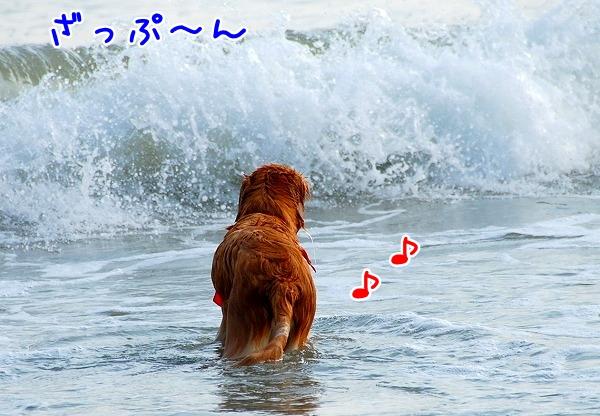 DSC_0063_20110509005434.jpg