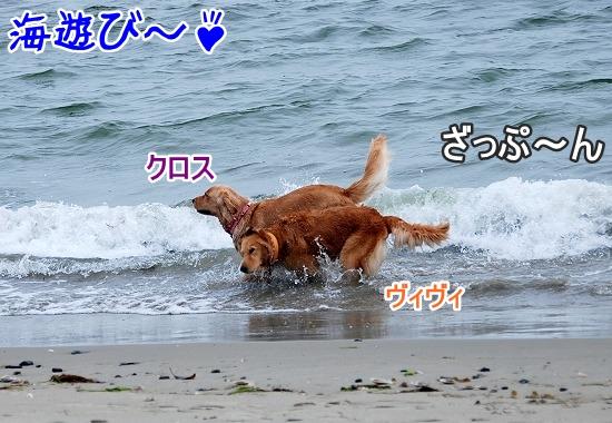 DSC_0063_20110518223529.jpg