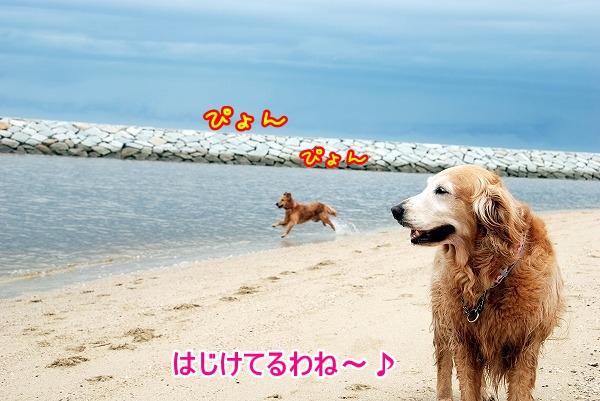 DSC_0063_20110601193149.jpg
