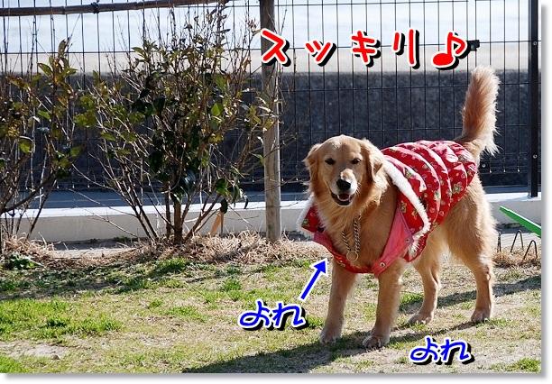 DSC_0063_20120227221021.jpg
