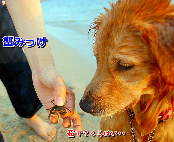 DSC_0064_20110820213846.jpg
