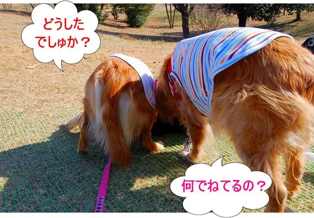 DSC_0067_20110204222748.jpg