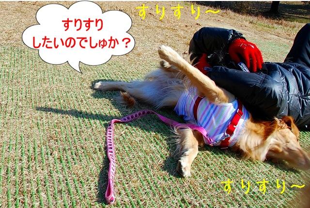 DSC_0068_20110204222743.jpg