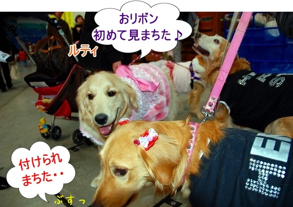 DSC_0068_20110207011251.jpg